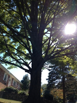 Satisfaction Tree Service | Tree Pruning | Tree Clean Out