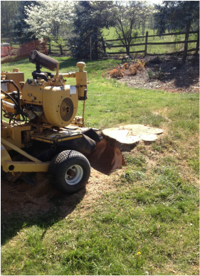 Satisfaction Tree Service | Stump Removal | Stump Grinding