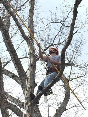 Satisfaction Tree Service | Tree Trimming | Deadwood Removal
