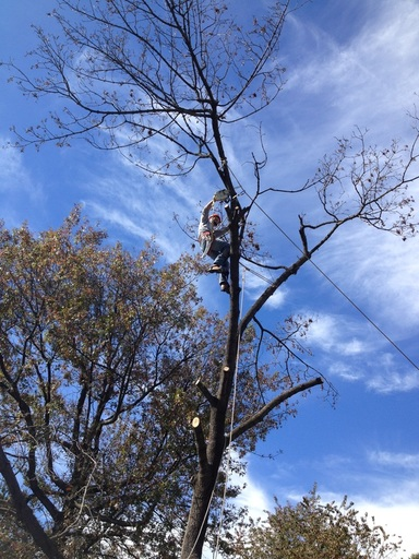 Satisfaction Tree Service | Tree Removal | Tree Trimming | Roanoke